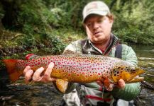 Massimo Sodi 's Fly-fishing Photo of a Browns | Fly dreamers