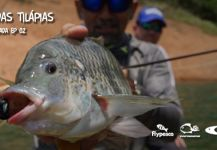 Fly-fishing Picture of Nile Tilapia shared by Kid Ocelos | Fly dreamers