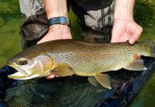 Uros Kristan - URKO Fishing Adventures 's Fly-fishing Picture of a Rainbow trout | Fly dreamers