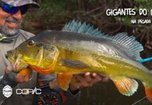 Fly-fishing Photo of Peacock Bass shared by Kid Ocelos | Fly dreamers