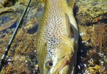 BERNET Valentin 's Fly-fishing Image of a German brown | Fly dreamers