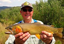 Fly-fishing Pic of Truite fardee shared by Mark Greer | Fly dreamers