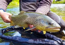 Uros Kristan - URKO Fishing Adventures 's Fly-fishing Photo of a Marble Trout | Fly dreamers