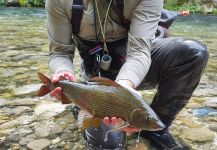 Fly-fishing Picture of Thymallus thymallus shared by Uros Kristan - URKO Fishing Adventures | Fly dreamers