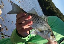 Fly-fishing Pic of White Bass shared by Brian Shepherd | Fly dreamers