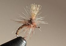 Fly for European brown trout by Walter Engelke | Fly dreamers