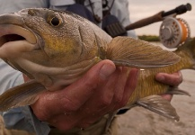 Mario Smit 's Fly-fishing Catch of a Yellowfish – Fly dreamers