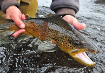 Scott Smith 's Fly-fishing Pic of a Brown trout – Fly dreamers