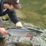 Fly-fishing Photoof Silver salmon shared by Luis San Miguel – Fly dreamers