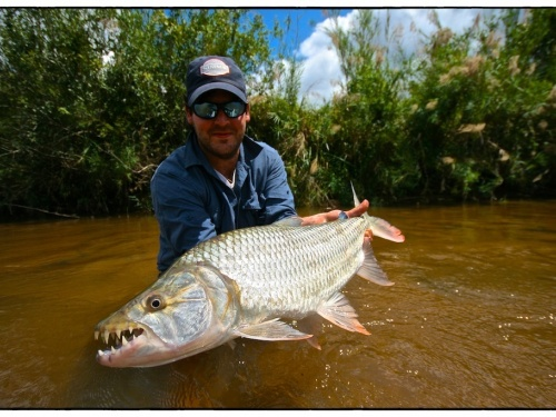 An amazing journey in search of the river dogs. The first time I met tigerfish was during a trip with my father to the lower Zambezi area. It was a fantastic experience, with plenty of ferocious strikes and elephants walking by our tents at night.Africa i...