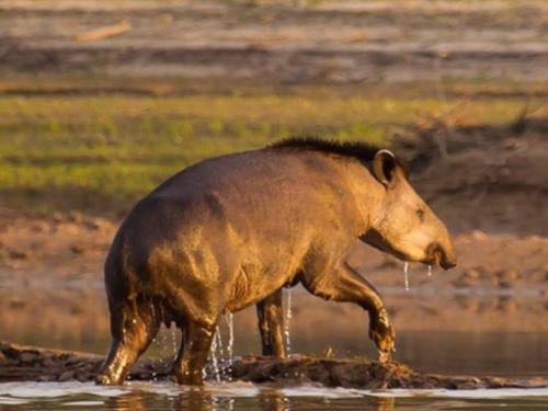 Será el primero de la historia creado por suscripción pública y el más grande del norte argentino.  Gracias al apoyo de ciudadanos particulares, ONGs, empresas y  estado, la sanción de esta ley permitirá proteger a perpetuidad la biodiversidad de es...