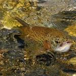 La visión del color en los peces