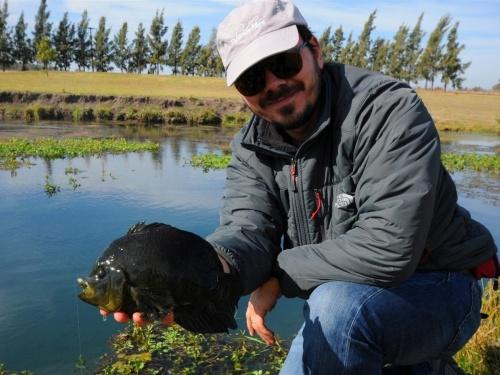 10 Tips para la pesca con mosca de chanchitas. 1-Pescar a pez visto. Lo primero y fundamental para aumentar nuestras chances de éxito frente a las chanchitas es usar nuestra vista. Debemos recorrer lentamente el ambiente, detenernos frecuentemente y obse...