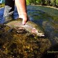 ArcoIris en las cristalinas aguas del Malleo - Catch and Release.