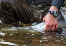 Atlantic salmon Fly-fishing Situation – Black Fly Eyes Flyfishing shared this () Image in Fly dreamers