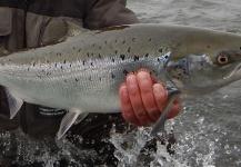 Kristinn Ingolfsson 's Fly-fishing Photoof a Atlantic salmon– Fly dreamers