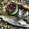 Light tackle, small wild fish = a lot of fun