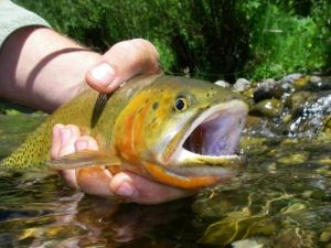 Fly Fishing Outfiiters Guide bios