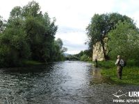 Dry fly madness at the river Ljubljanica!