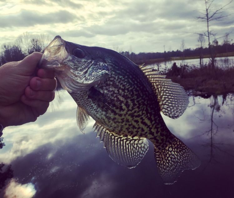 CRAPPIE... on a 4 wt flyrod and a Wooly Bugger= Awesome!