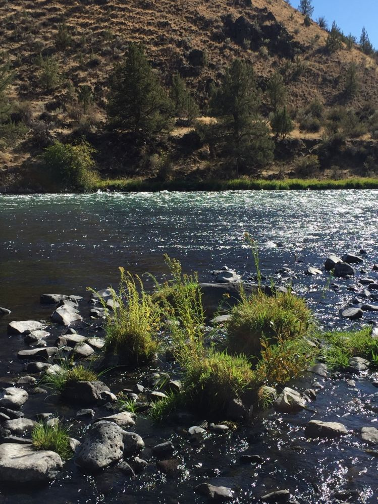 Deschutes River - Fly fishing Photos | Fly dreamers