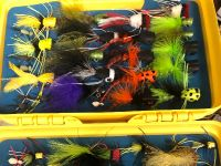 Everglades freshwater flies