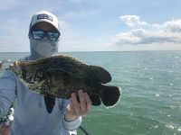 Tripletail fishing in the Everglades