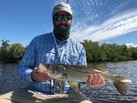 Backcountry snook
