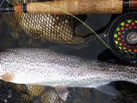Specks full Sava Rainbow