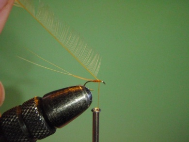 Fly tying - ephemere / may flie - Step 8