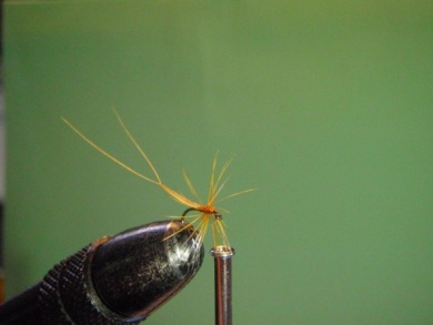 Fly tying - ephemere / may flie - Step 9