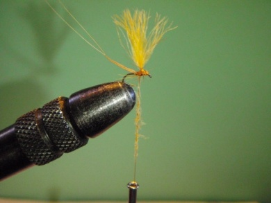 Fly tying - ephemere / may flie - Step 14