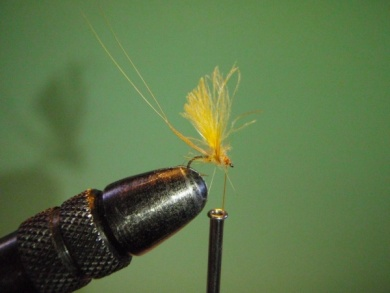 Fly tying - ephemere / may flie - Step 17