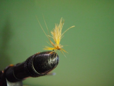 Fly tying - ephemere / may flie - Step 18