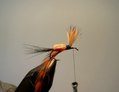 Fly tying - Red Humpy - Step 7