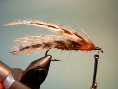 Fly tying - Matuka - Step 7