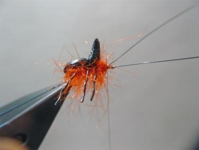 Fly tying - Gaja's Winged Fishing Beetle - Step 19