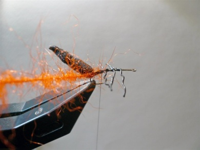 Fly tying - Gaja's Winged Fishing Beetle - Step 14