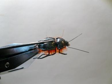 Fly tying - Gaja's Winged Fishing Beetle - Step 29