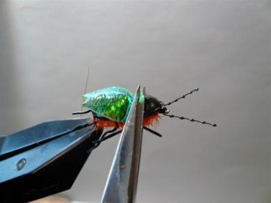 Fly tying - Gaja's Winged Fishing Beetle - Step 42