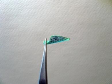 Fly tying - Gaja's Winged Fishing Beetle - Step 39