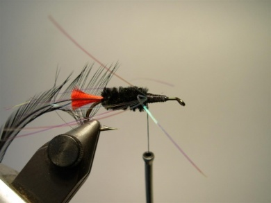 Fly tying - Woolly Worm - Step 6