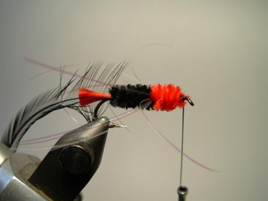 Fly tying - Woolly Worm - Step 8