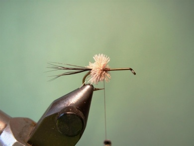 Fly tying - Irresistible Wulff - Step 2