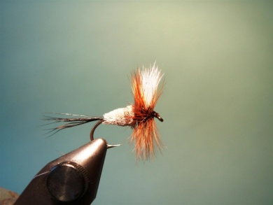 Fly tying - Irresistible Wulff - Step 8