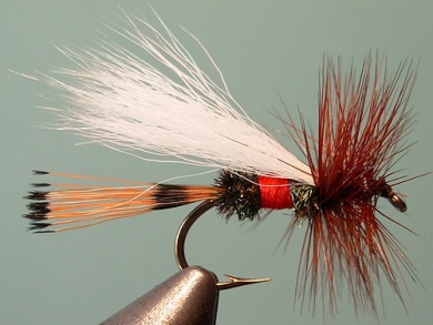 Fly tying - Royal Trude - Step 10