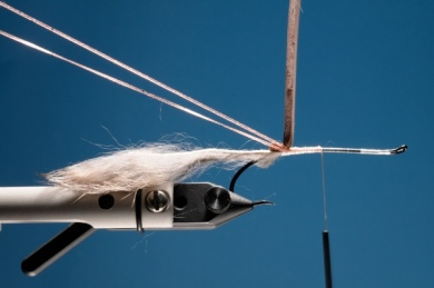 Fly tying - Rat Time - Step 3