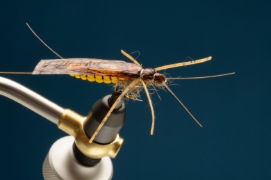 Fly tying - Adult Stone - Step 8