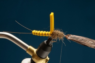 Fly tying - Adult Stone - Step 6