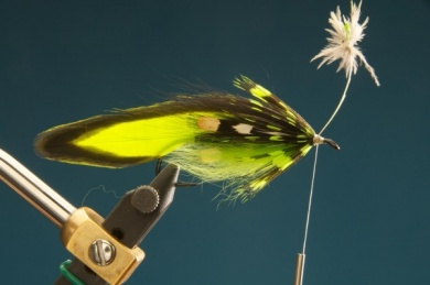 Fly tying - F & H Matuka - Step 9